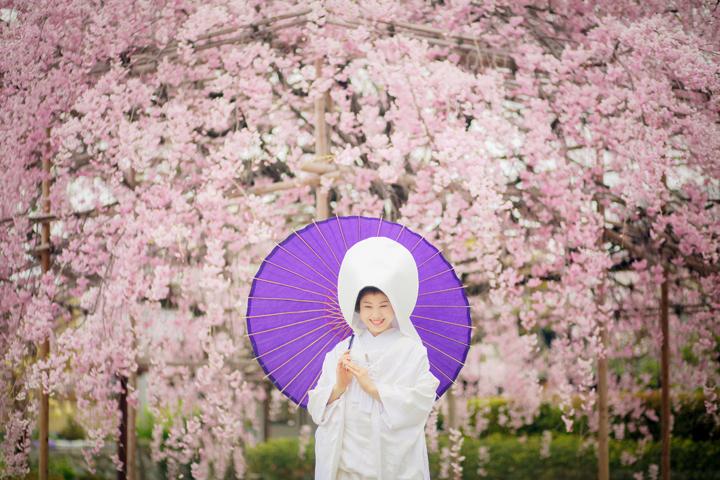 満開の桜の下で前撮りするおすすめの時期