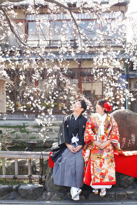 京都の桜で前撮り
