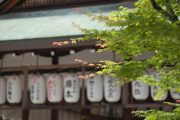 今宮神社 新緑 前撮り