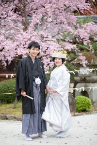 今宮神社 桜