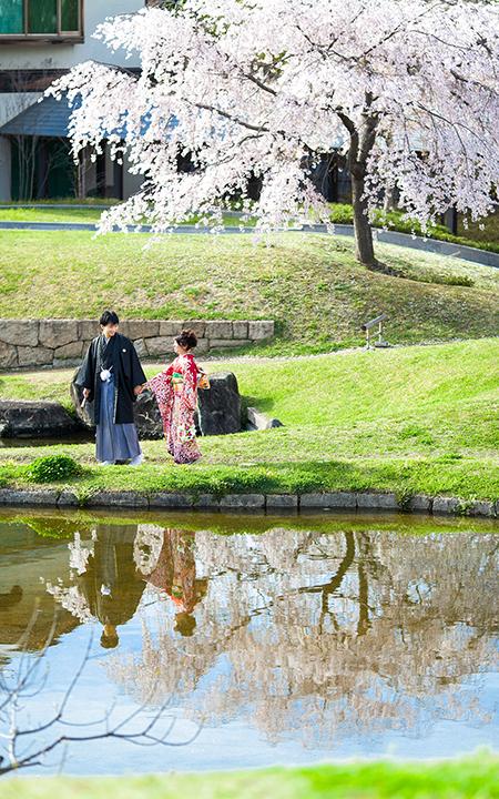 梅小路公園 桜