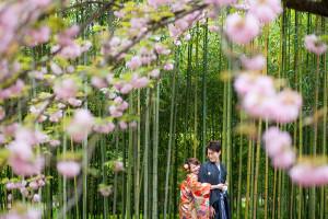牡丹桜 前撮り