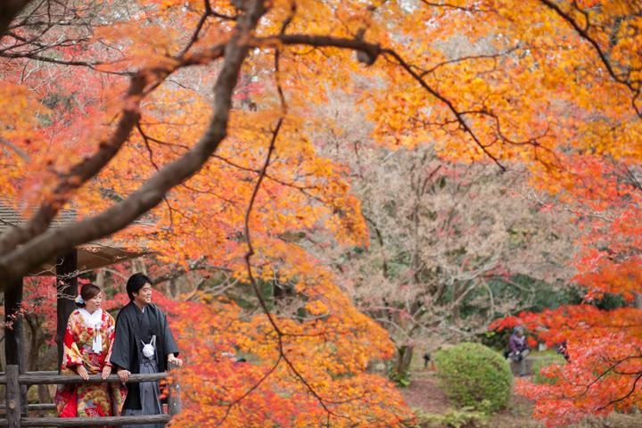 前撮り 12月 紅葉