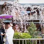 2014 桜 祇園