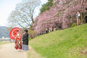 前撮り 鴨川 桜