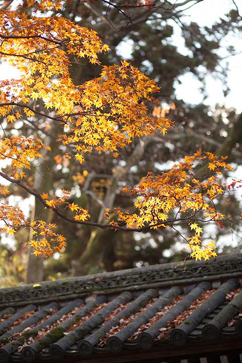 秋 紅葉 前撮り