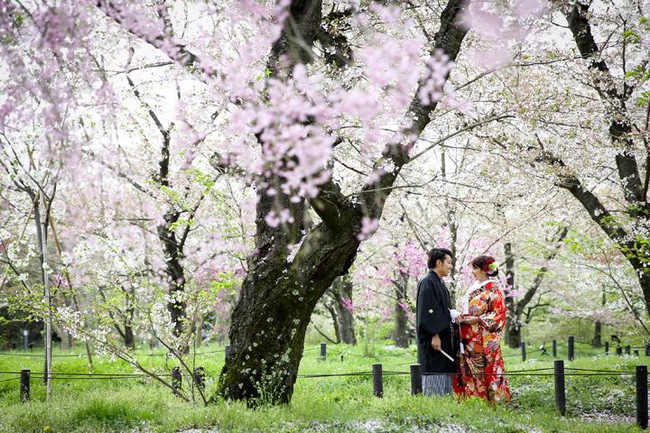 植物園 桜 前撮り