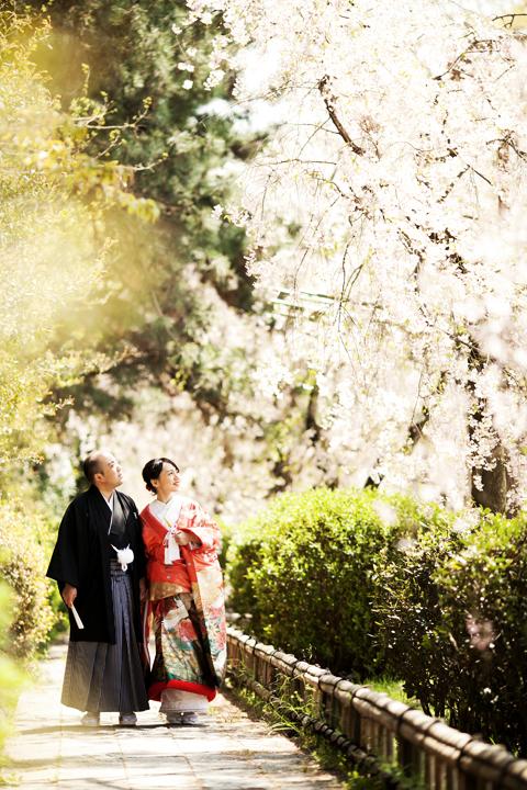 鴨川桜並木